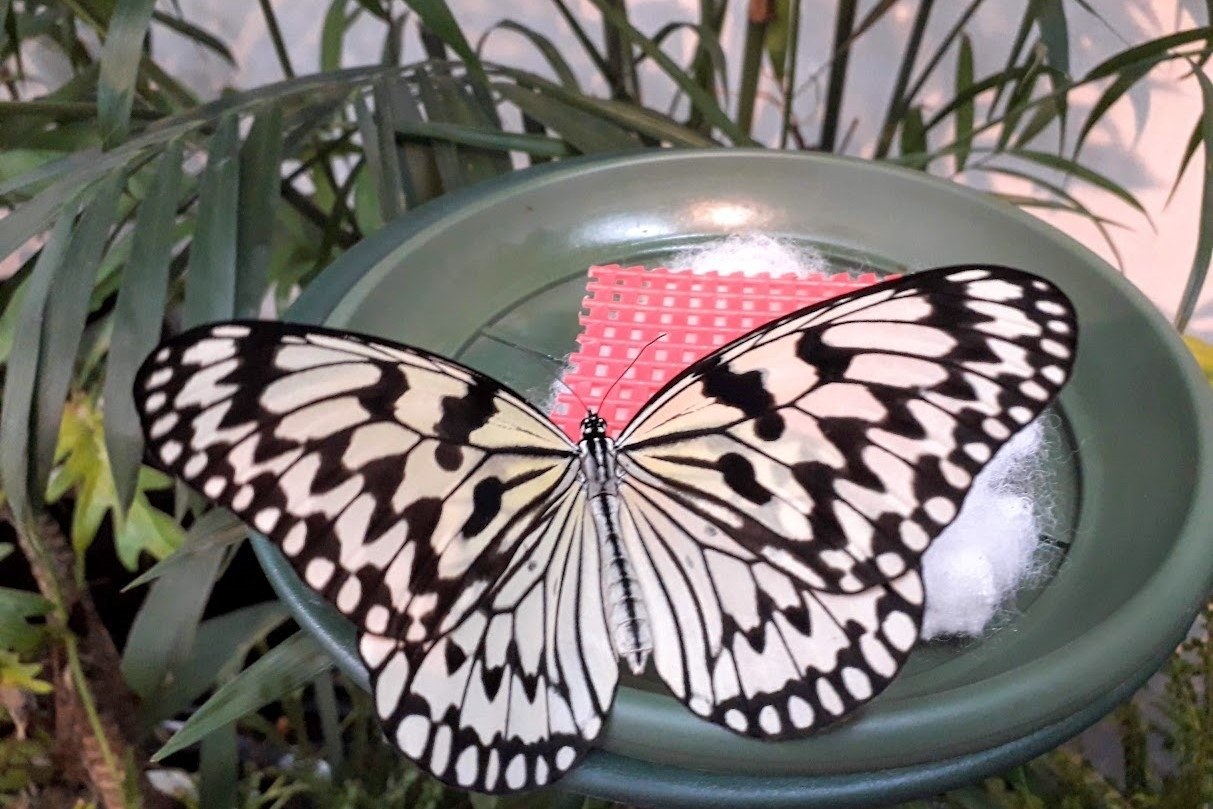 Butterfly example image 1