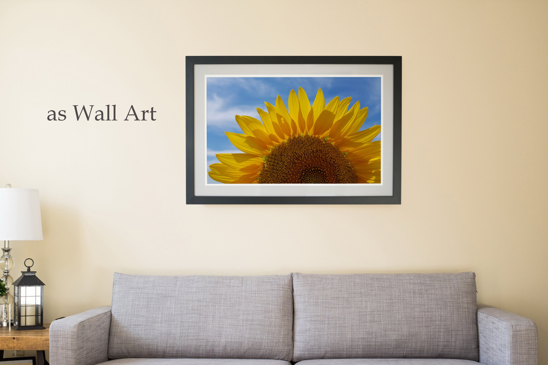 26 Sunflower Summer Photo Backgrounds example image 8