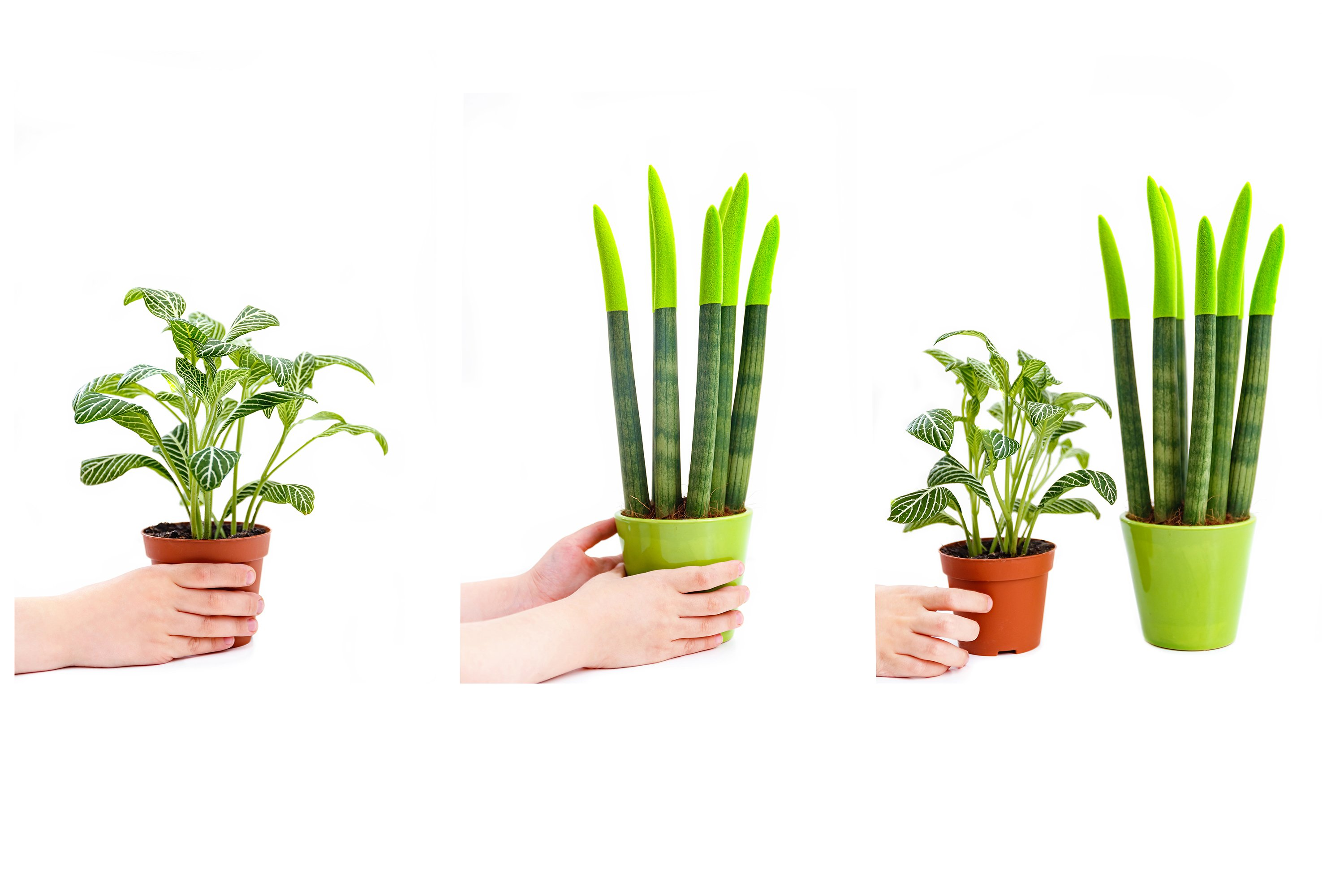3 images with a boy holding a plant on white background example image 1