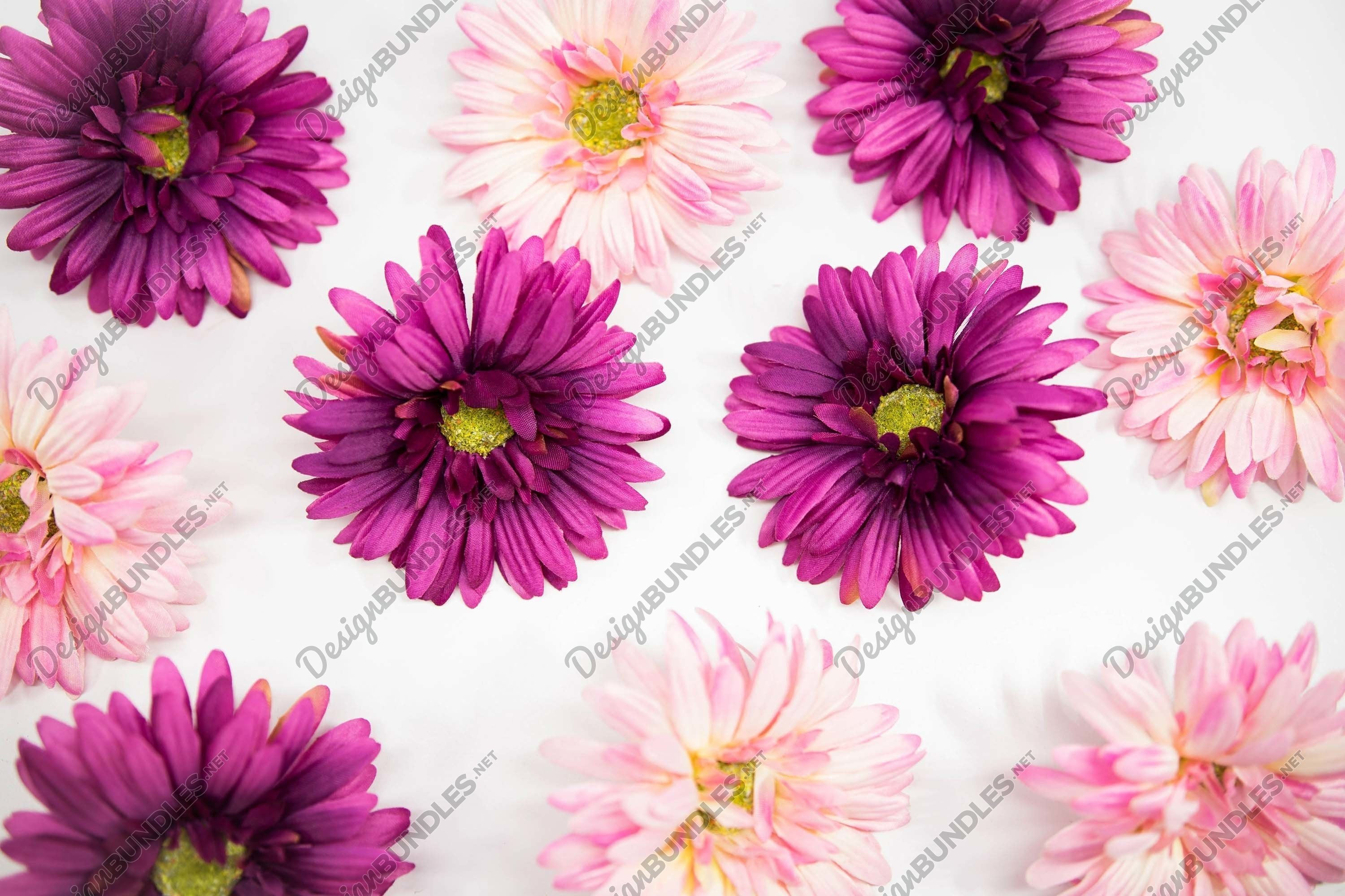 Stock Photo - Fuchsia Colored Cosmos Flowers Background example image 1