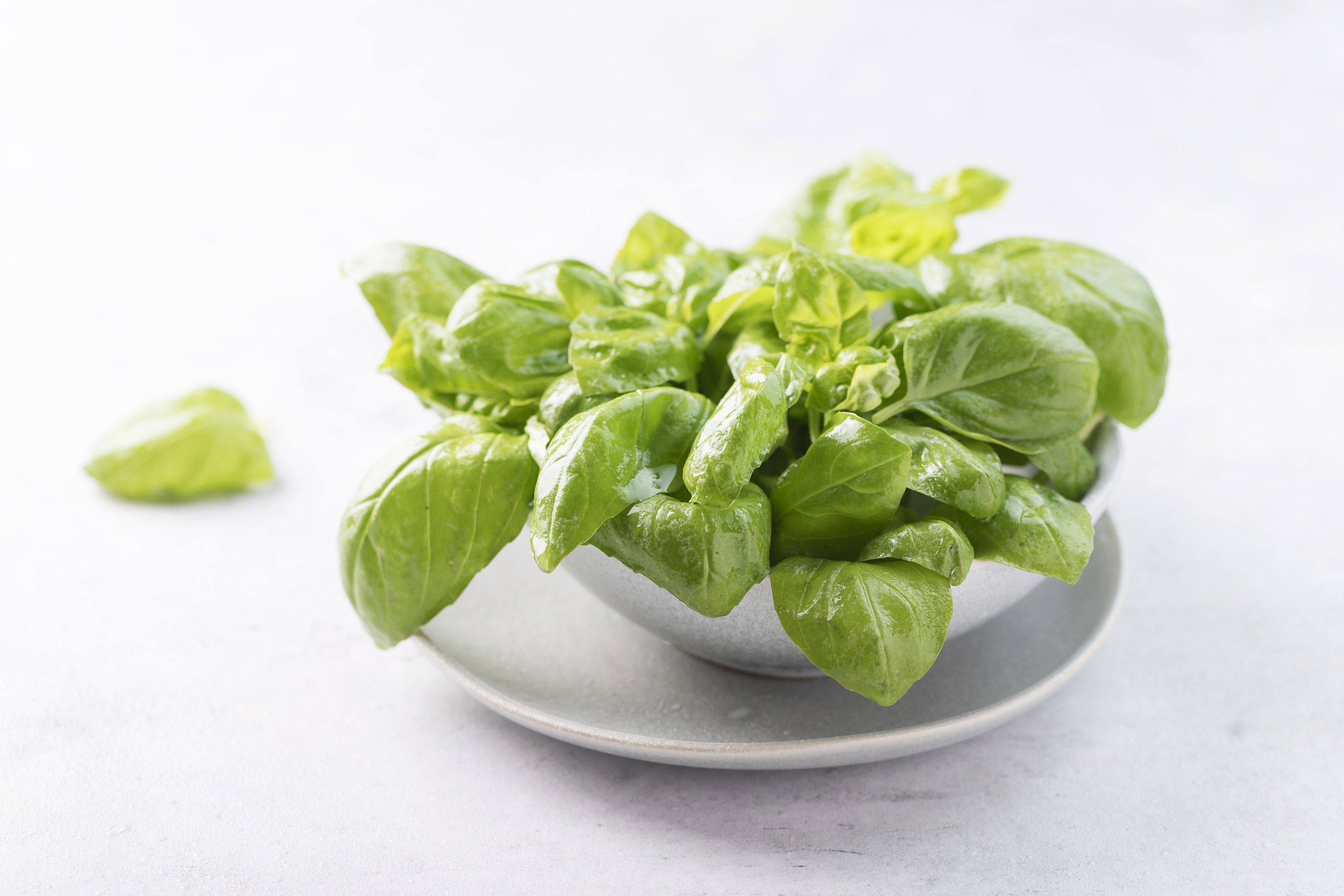 Fresh green basil in the ceramic bowl example image 1