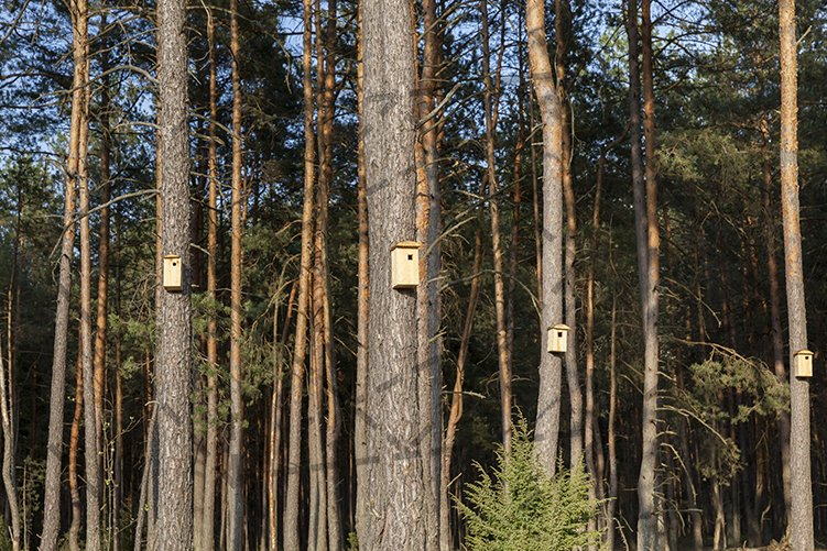new wooden birdhouses example image 1