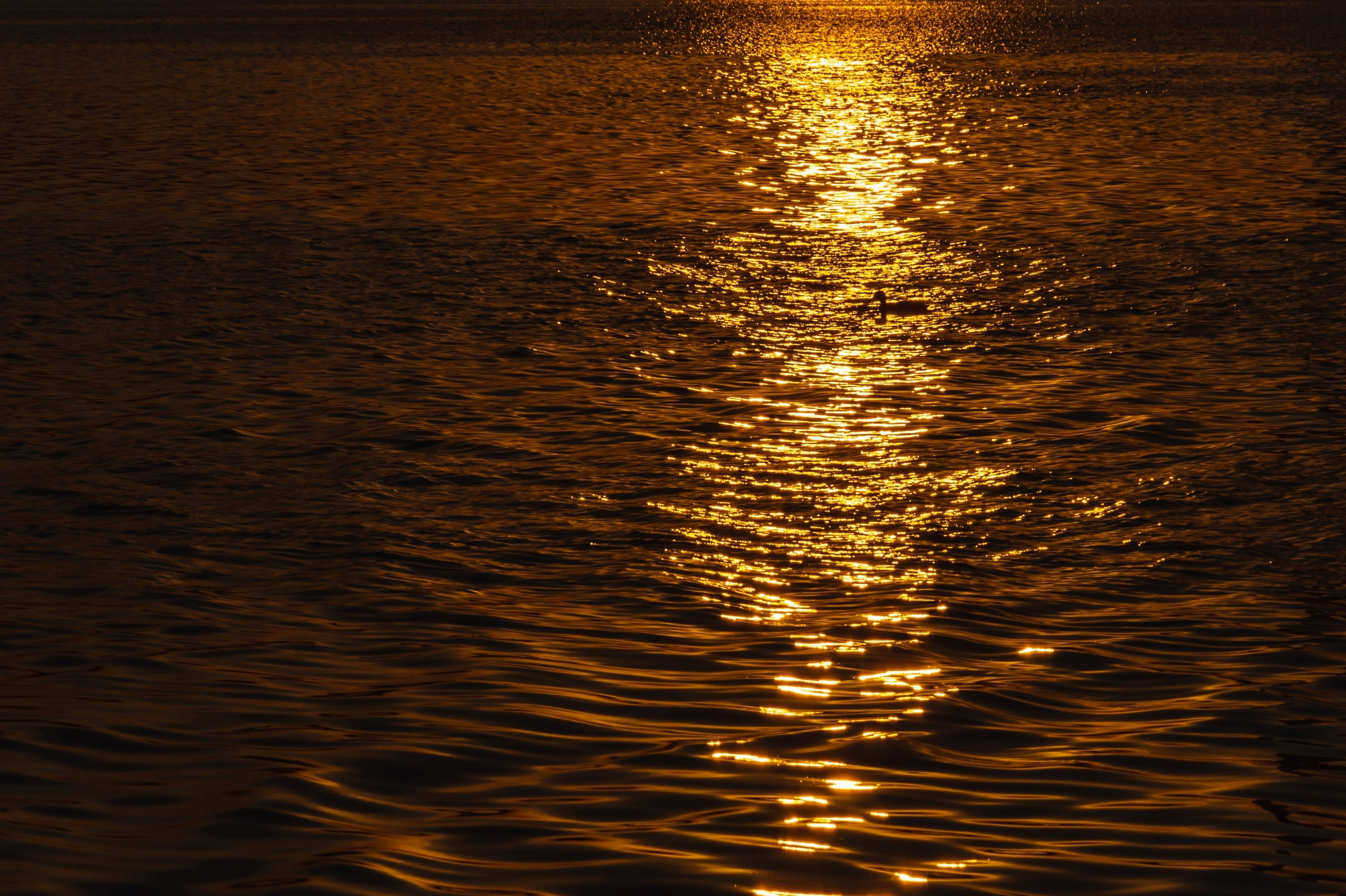 Beautiful sunset over the river. Duck in the solar path example image 1