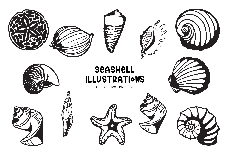 Seashell illustrations example image 1
