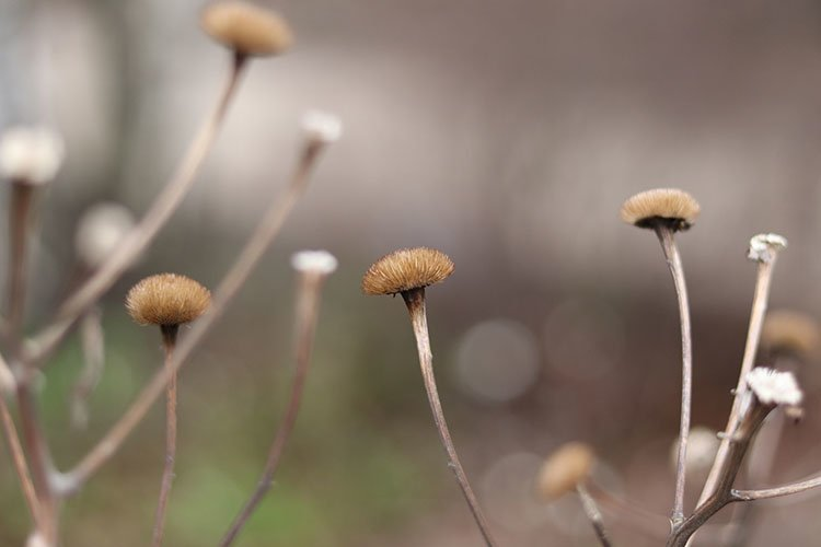 dry flowers in winter close-up example image 1