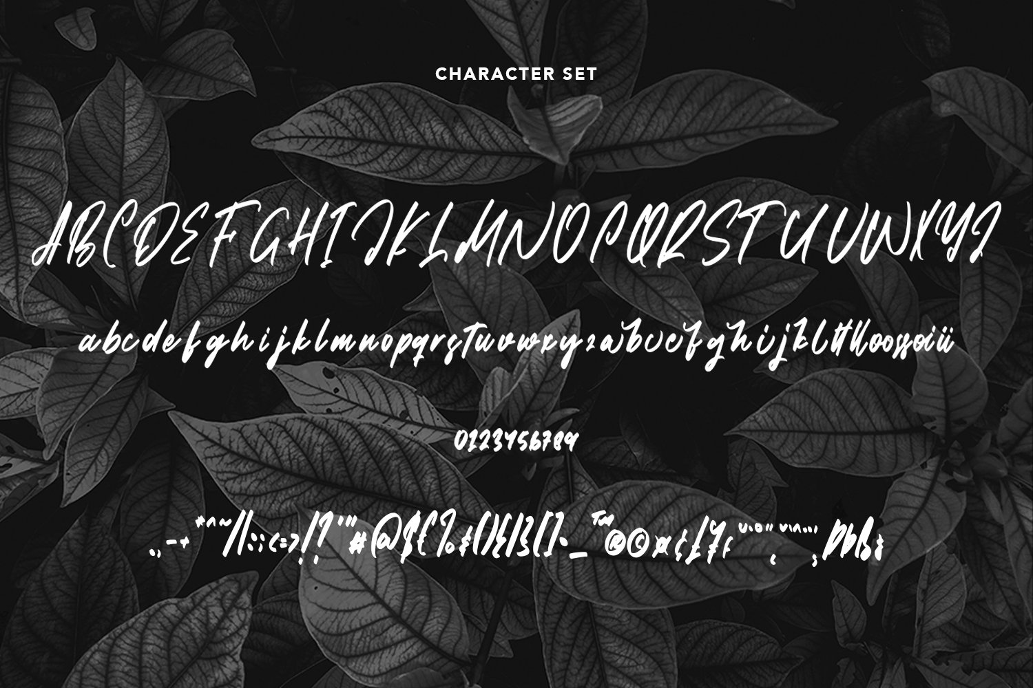 Jointress - Script Font example image 4