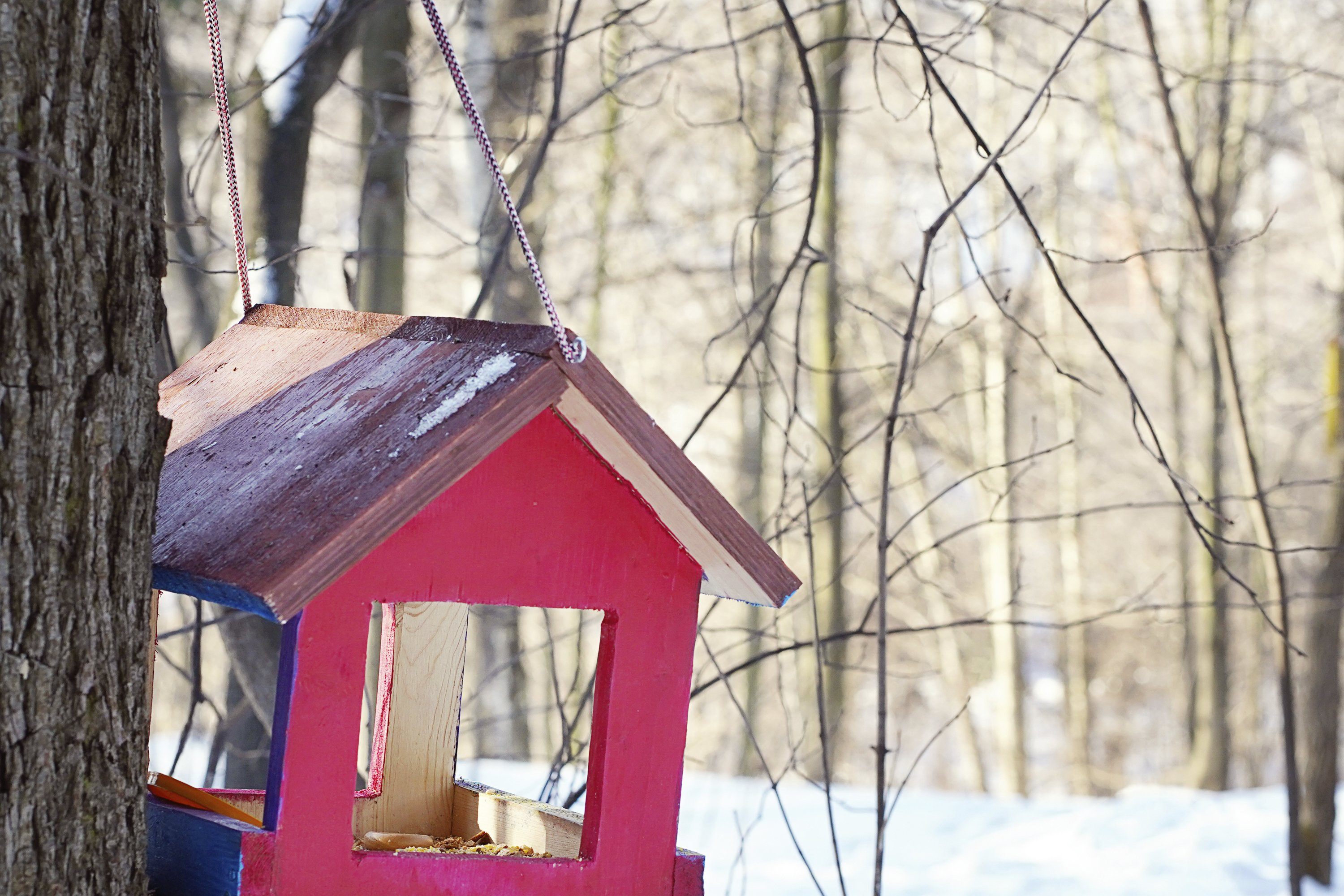 Bird feeder hanging from a tree. Red birdhouse during winter example image 1