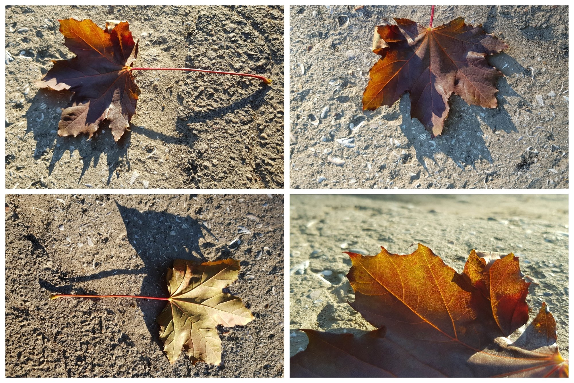 Set of 20 Autumn Photo Backgrounds with Maple Leaf example image 4