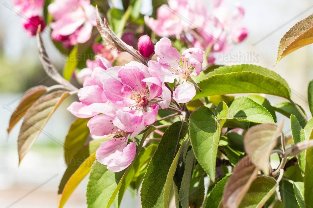natural background branch of peach flowers in spring time 606986 nature design bundles design bundles