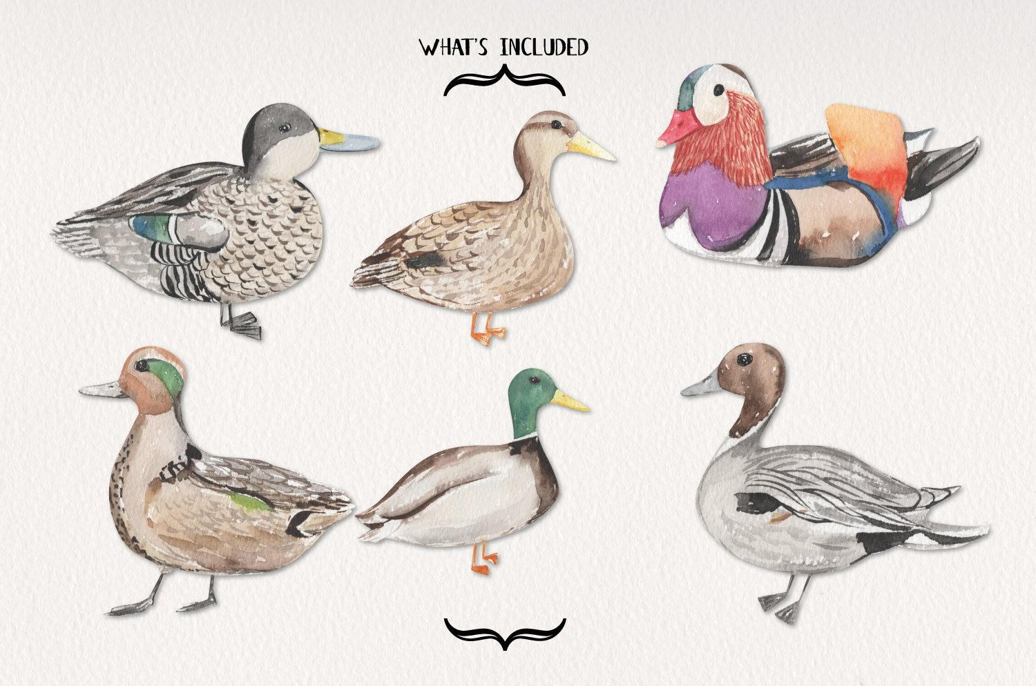 Ducks Watercolor Elements Hand Painted Birds Detailed example image 3