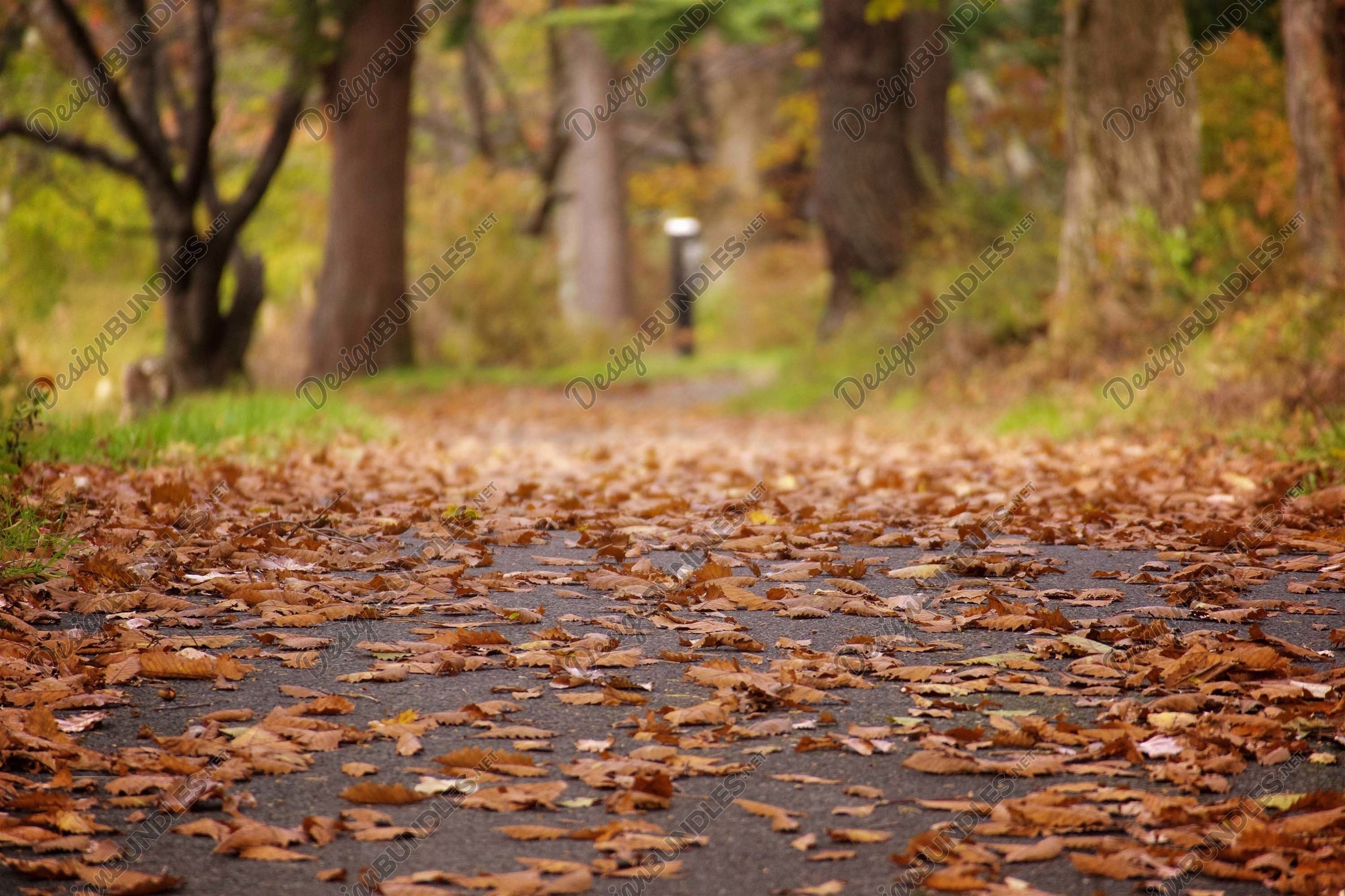 Stock Photo - Trees In Forest During Autumn example image 1