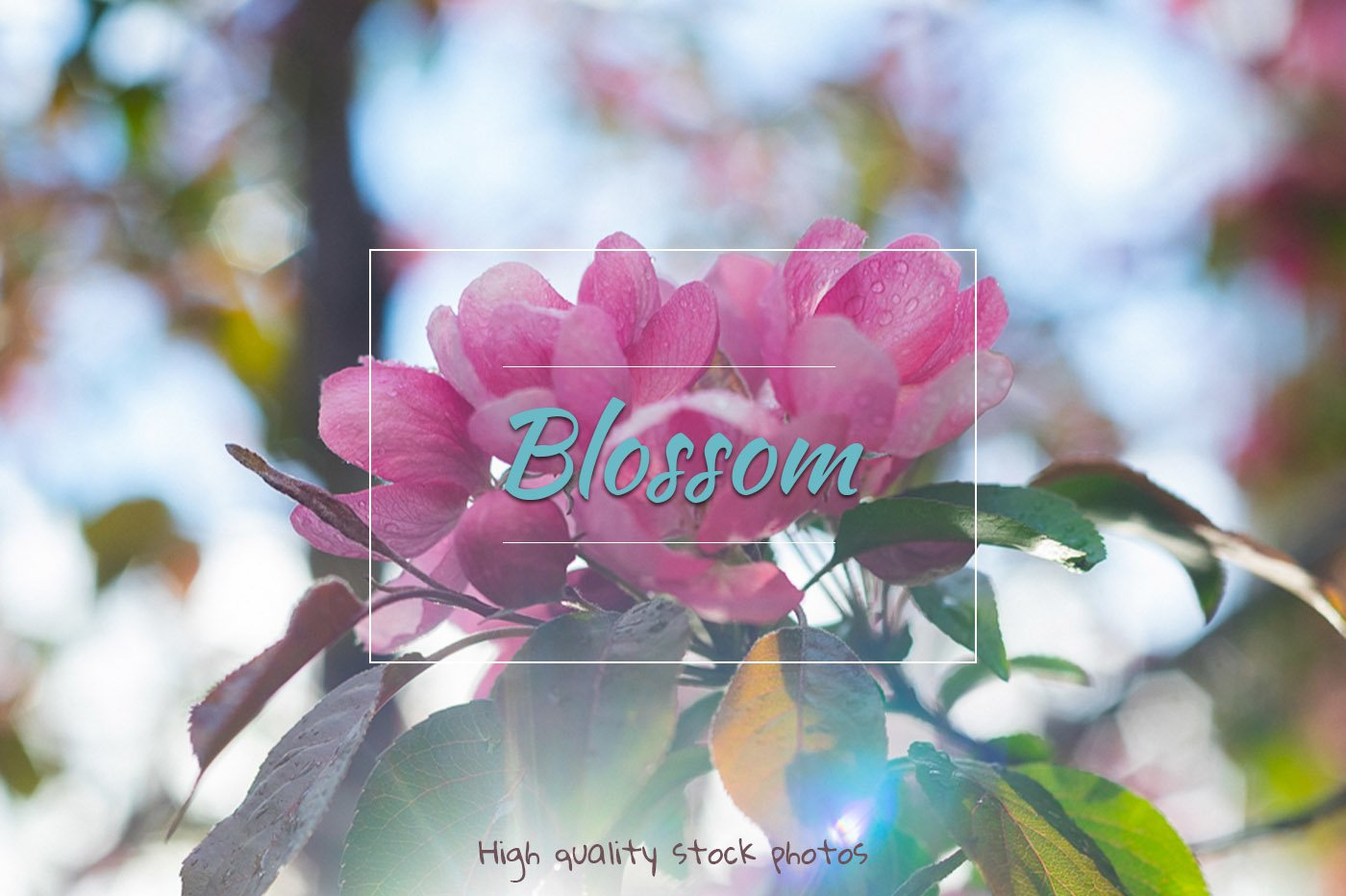 Blossom, spring Flowers example image 1