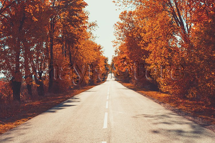 Empty asphalt road in autumn forest. Autumnal background . example image 1