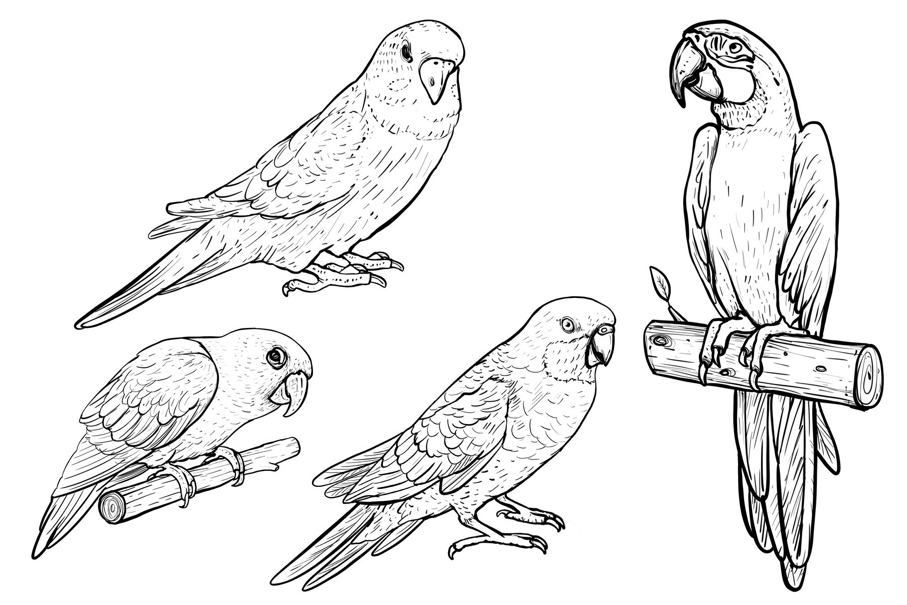 Drawn parrots example image 2