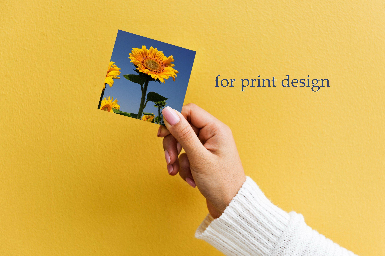 26 Sunflower Summer Photo Backgrounds example image 5