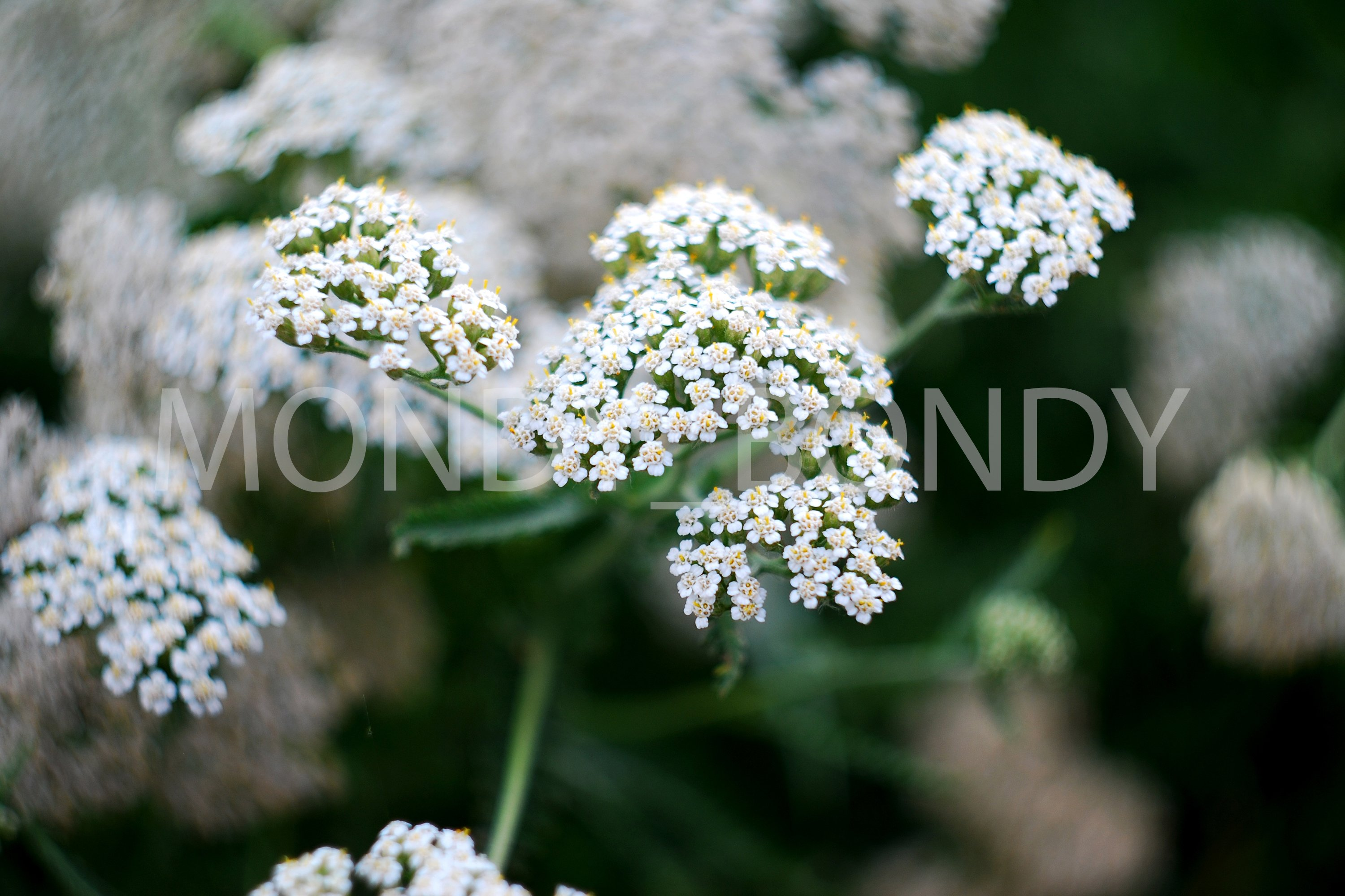 Small flowers and plants close up example image 1