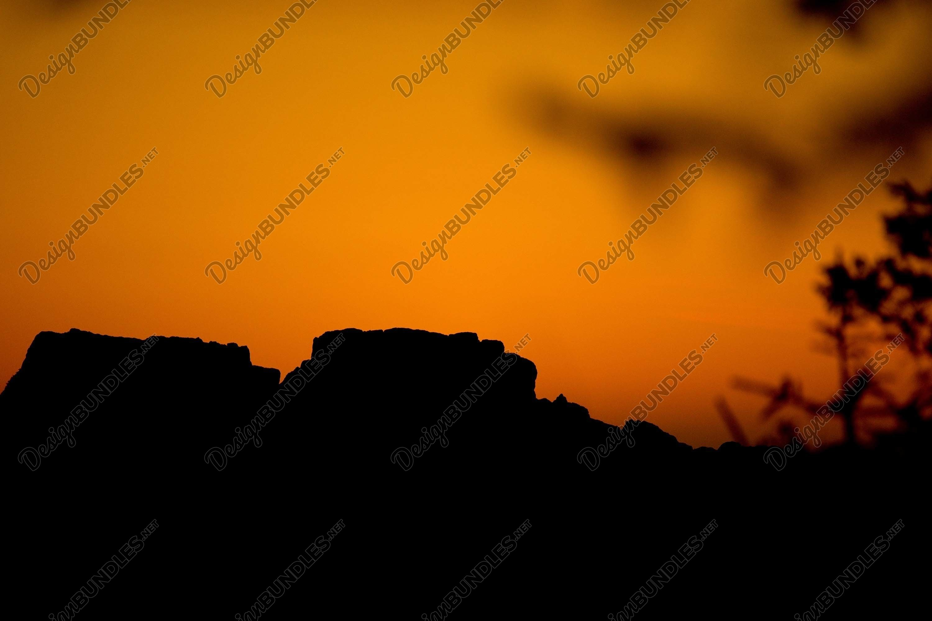 Stock Photo - The silhouette of trees at sunset example image 1