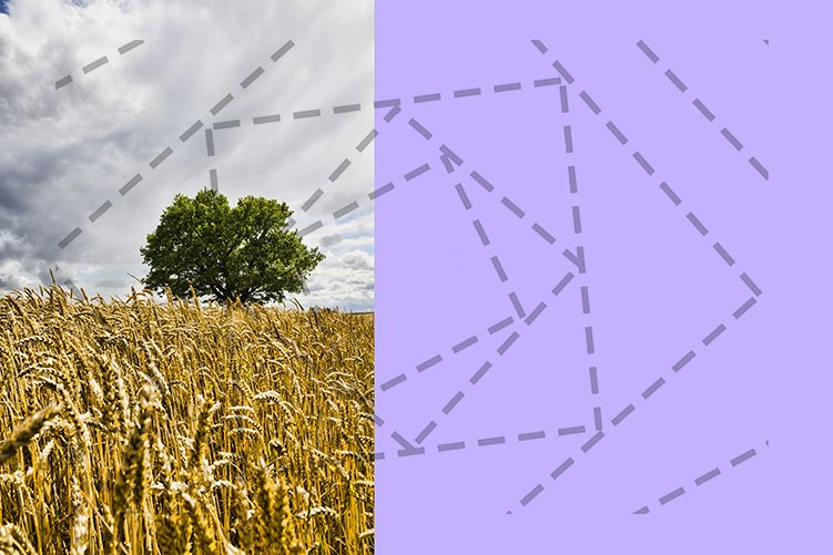 lonely oak example image 1