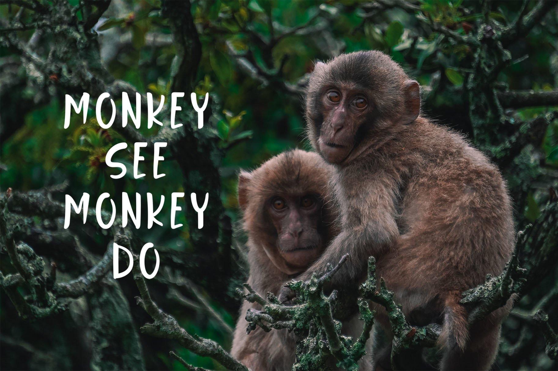 Jungle Display Font example image 6