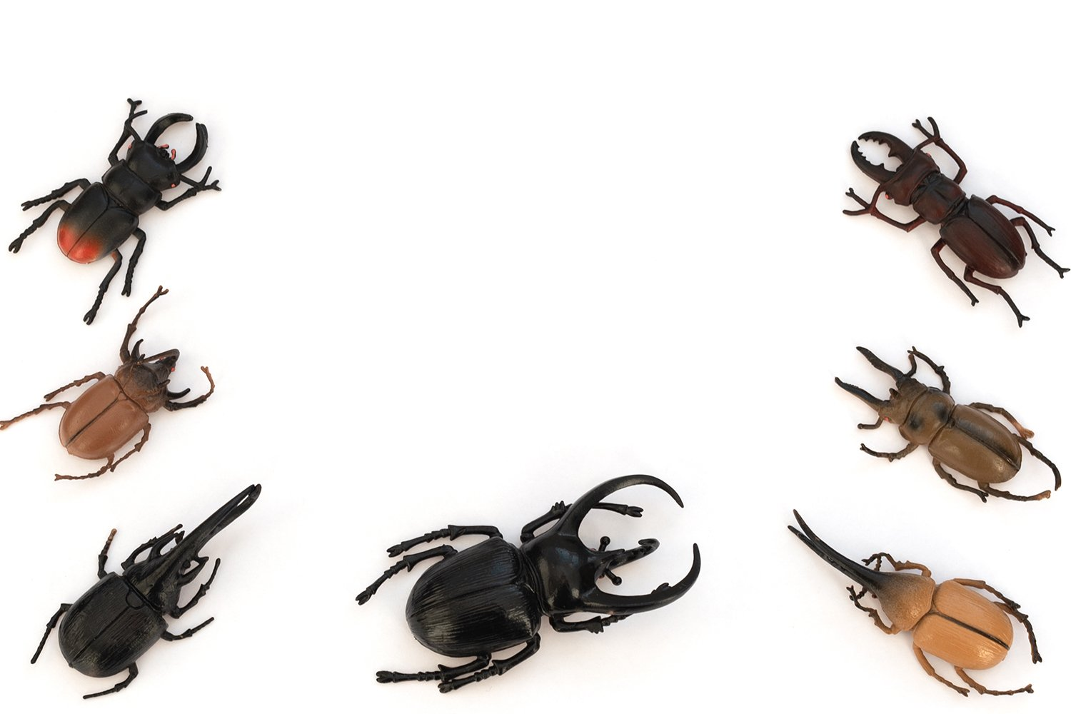 Different types of beetles on white background example image 1
