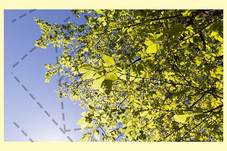 sunlight lit leaves example image 1