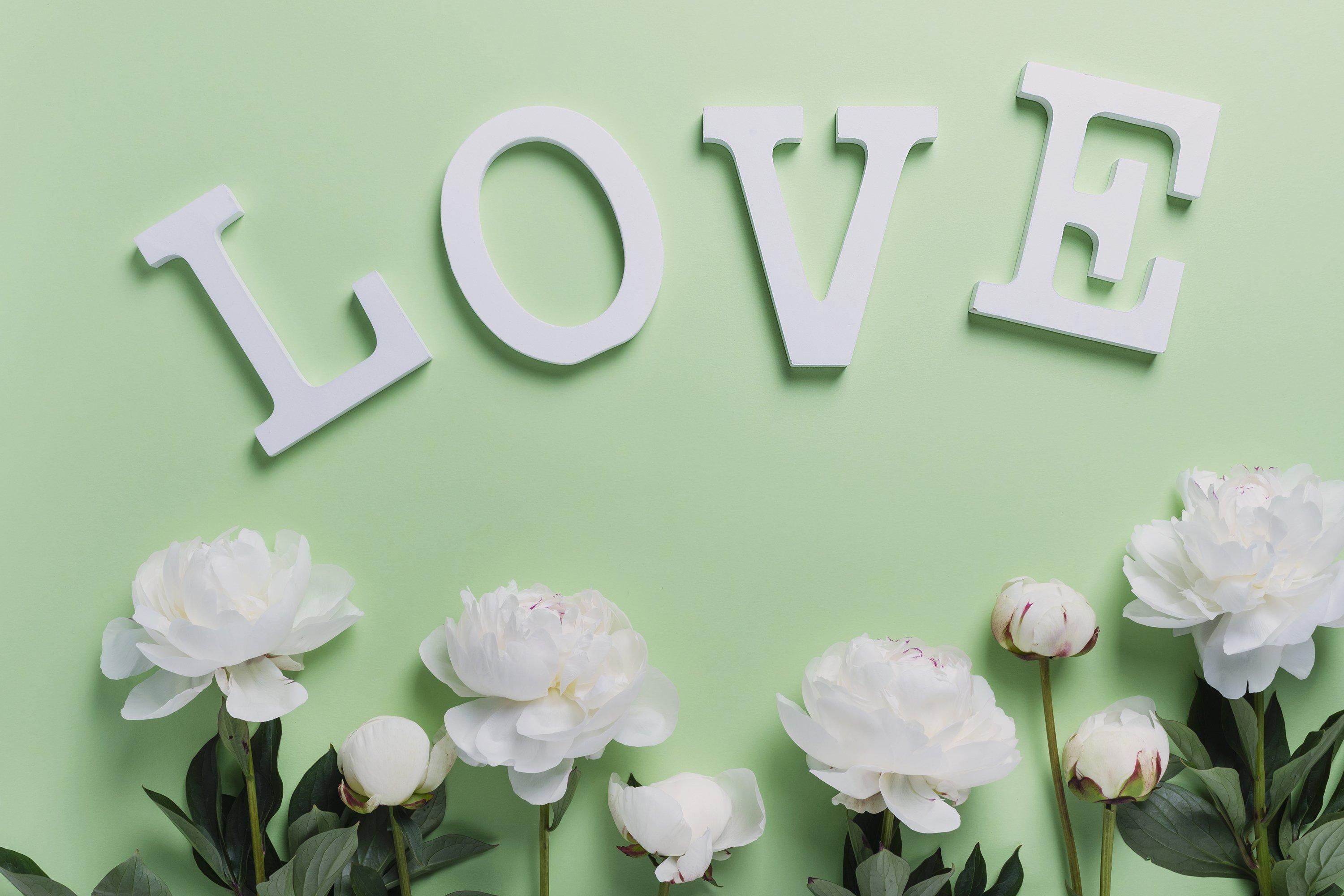 White elegant peony on the green background example image 1