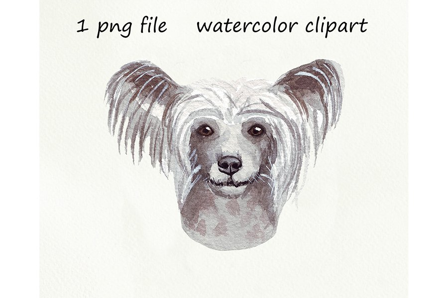 Watercolor dog png, Chinese Crested Dog, hand drawn example image 1