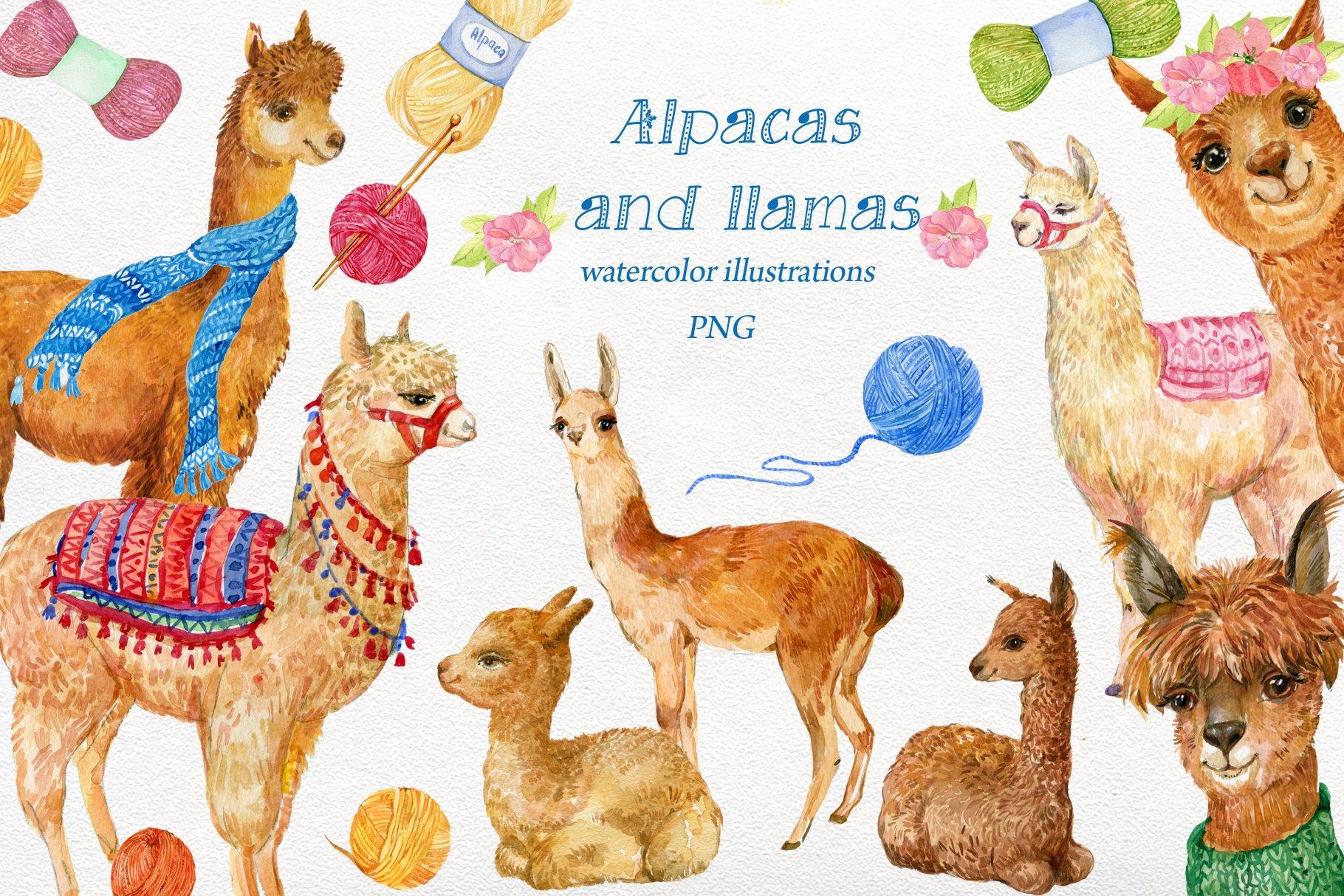 Alpacas and llamas .watercolor