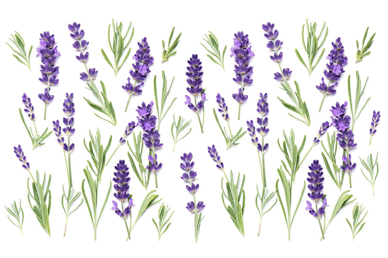 Lavender flowers Floral banner example image 1