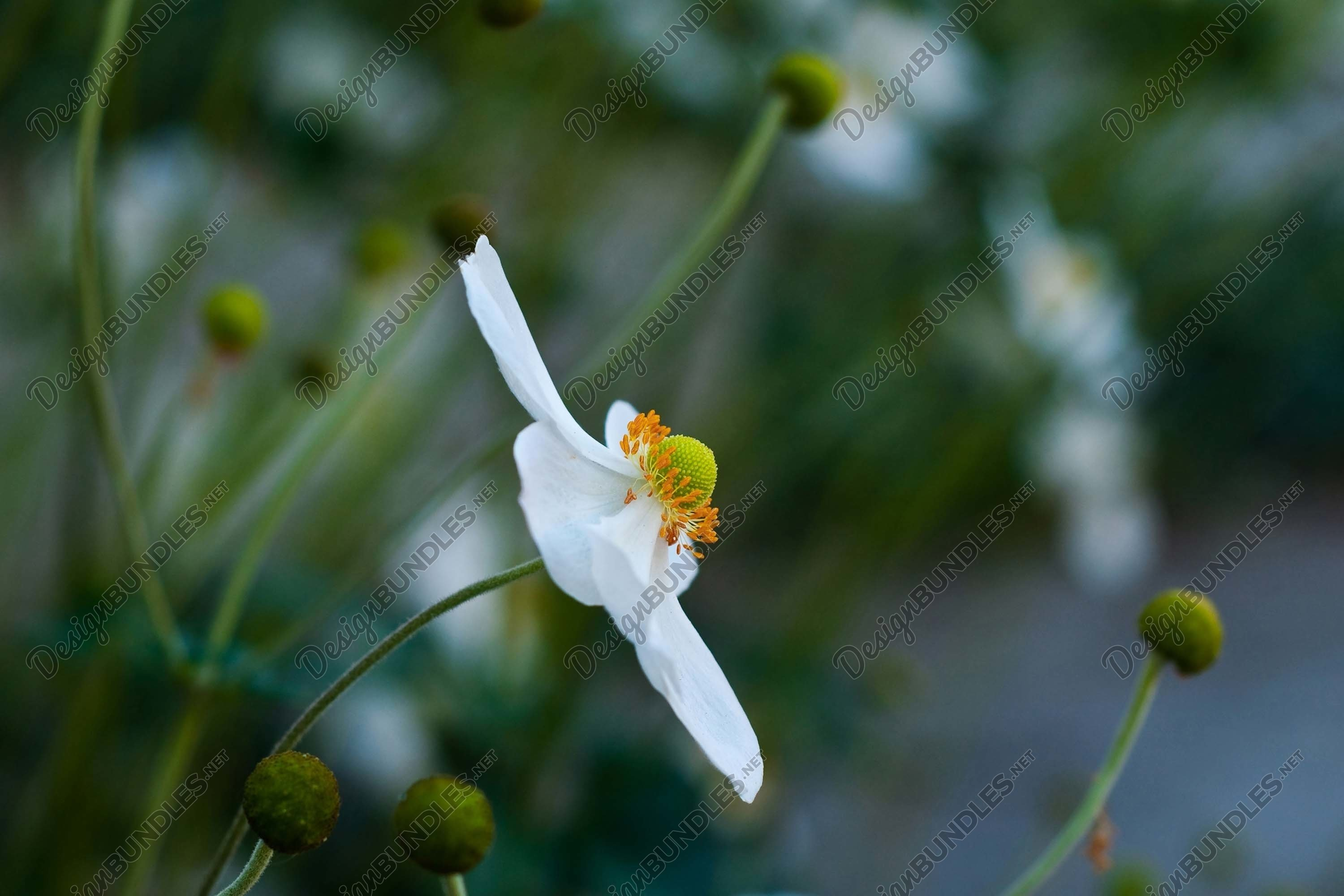 Stock Photo - Close-Up Of Flowers Blooming In Field example image 1