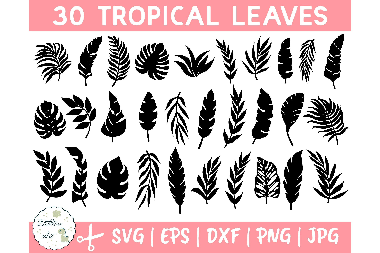 Tropical Leaves Svg Bundle Palm Leaves Svg Monstera 645821 Illustrations Design Bundles Can be used in wall decoration. tropical leaves svg bundle palm leaves svg monstera