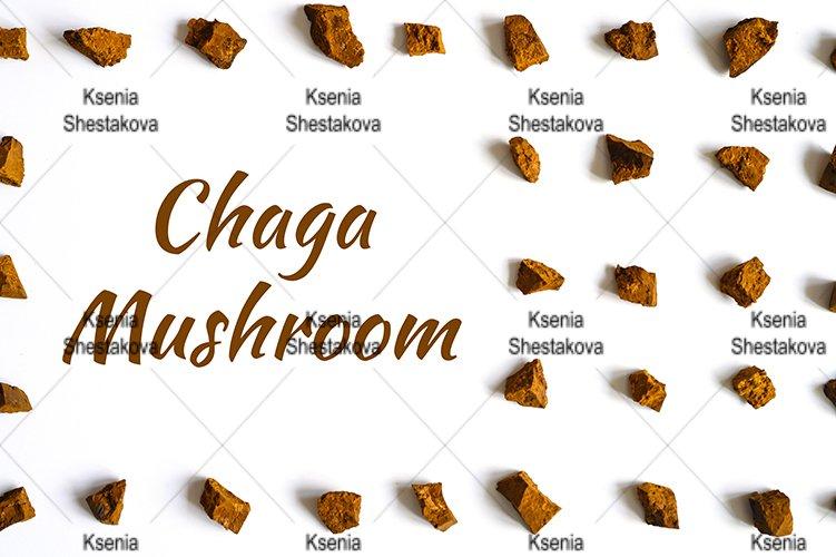 chaga mushroom broken pieces of birch tree fungus. text example image 1
