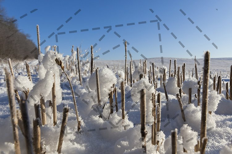 Snow covered field example image 1