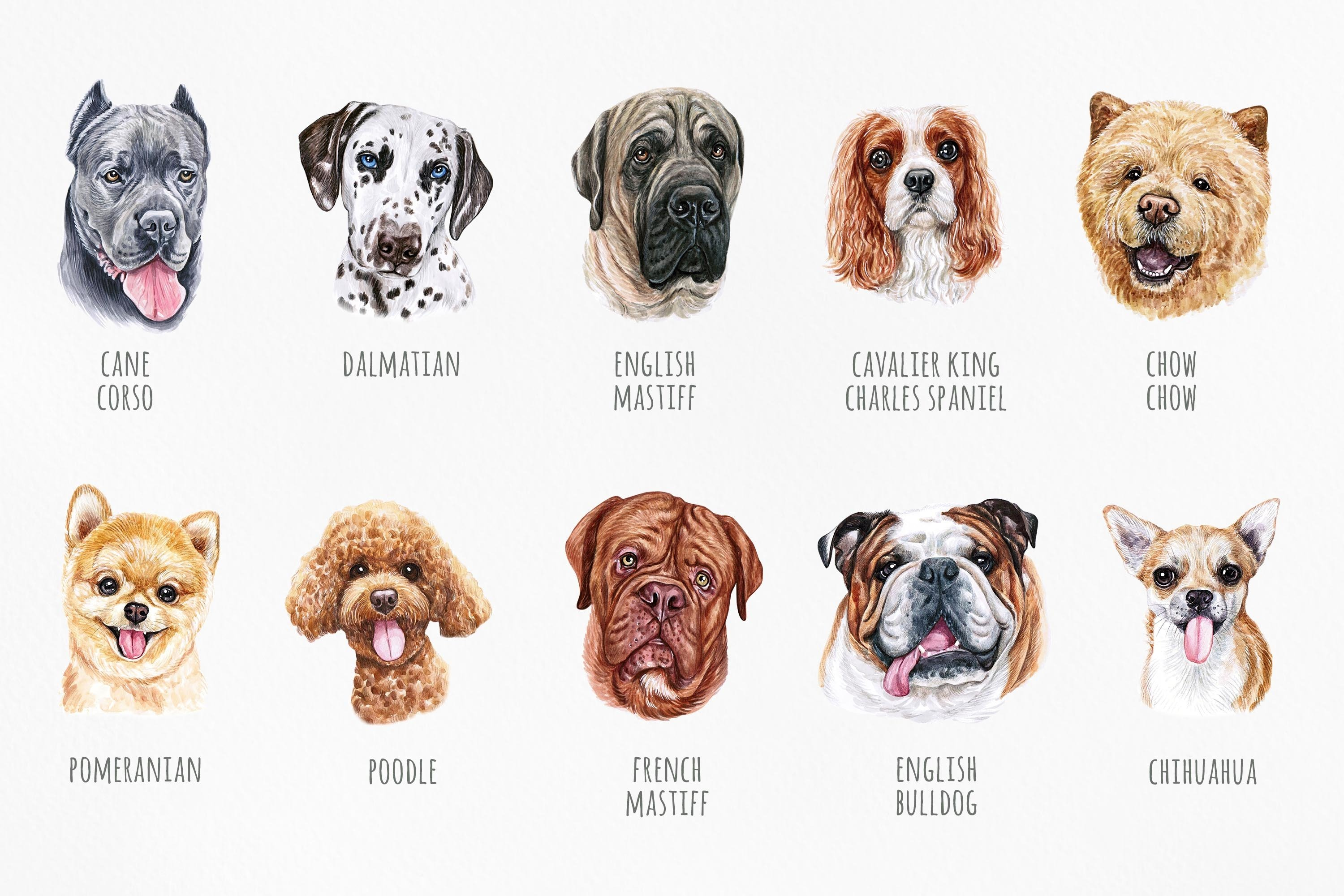 PART 1. Watercolor illustration set DOG breeds. Cute 20 dogs example image 3