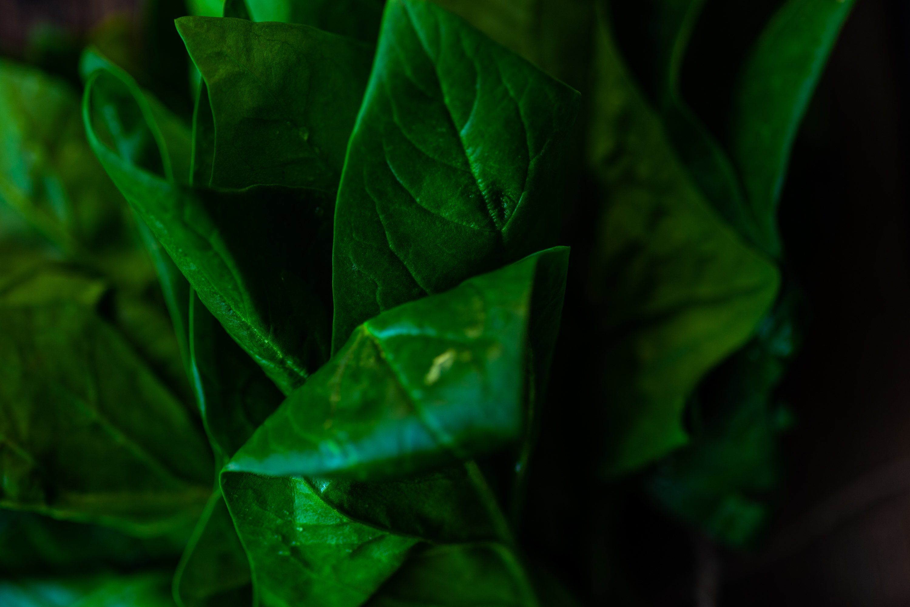Healthy food concept with fresh spinach example image 1