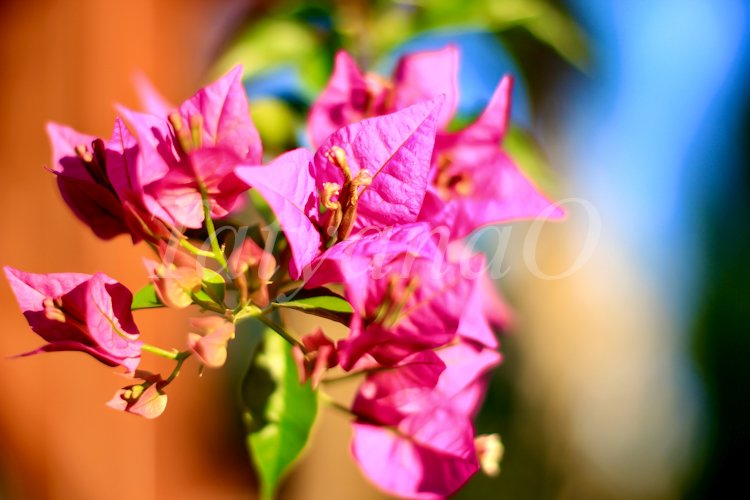 Beautiful floral background. example image 1