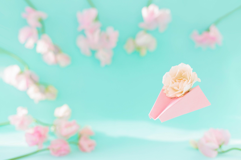 Paper airplane, pink sweet peas Lathyrus, rose flowers. Blue example image 1
