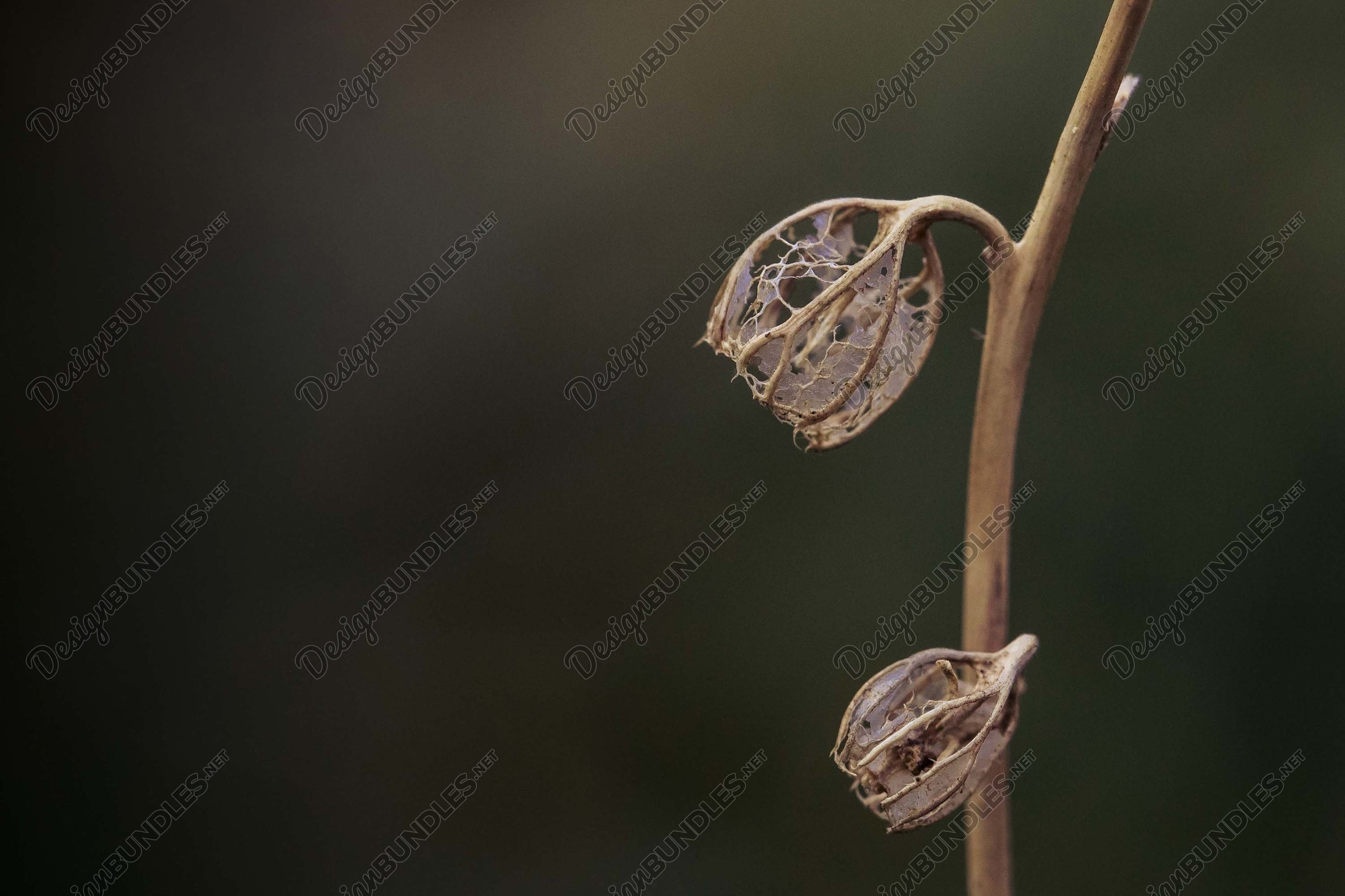 Stock Photo - Dry leaves on the stem example image 1