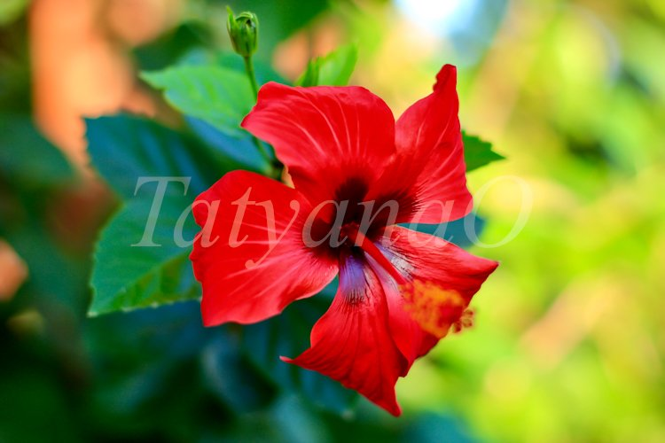 Floral natural background. example image 1