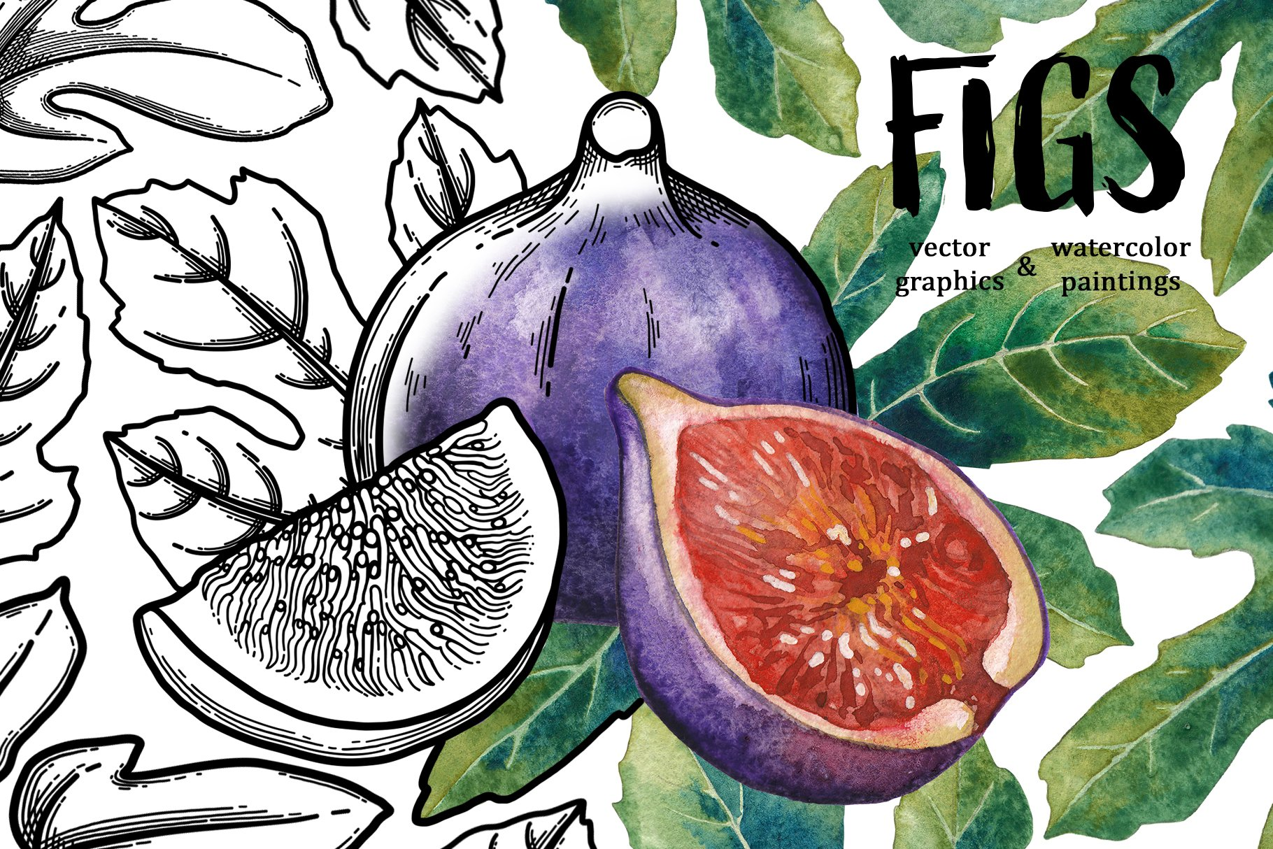 Figs example image 1