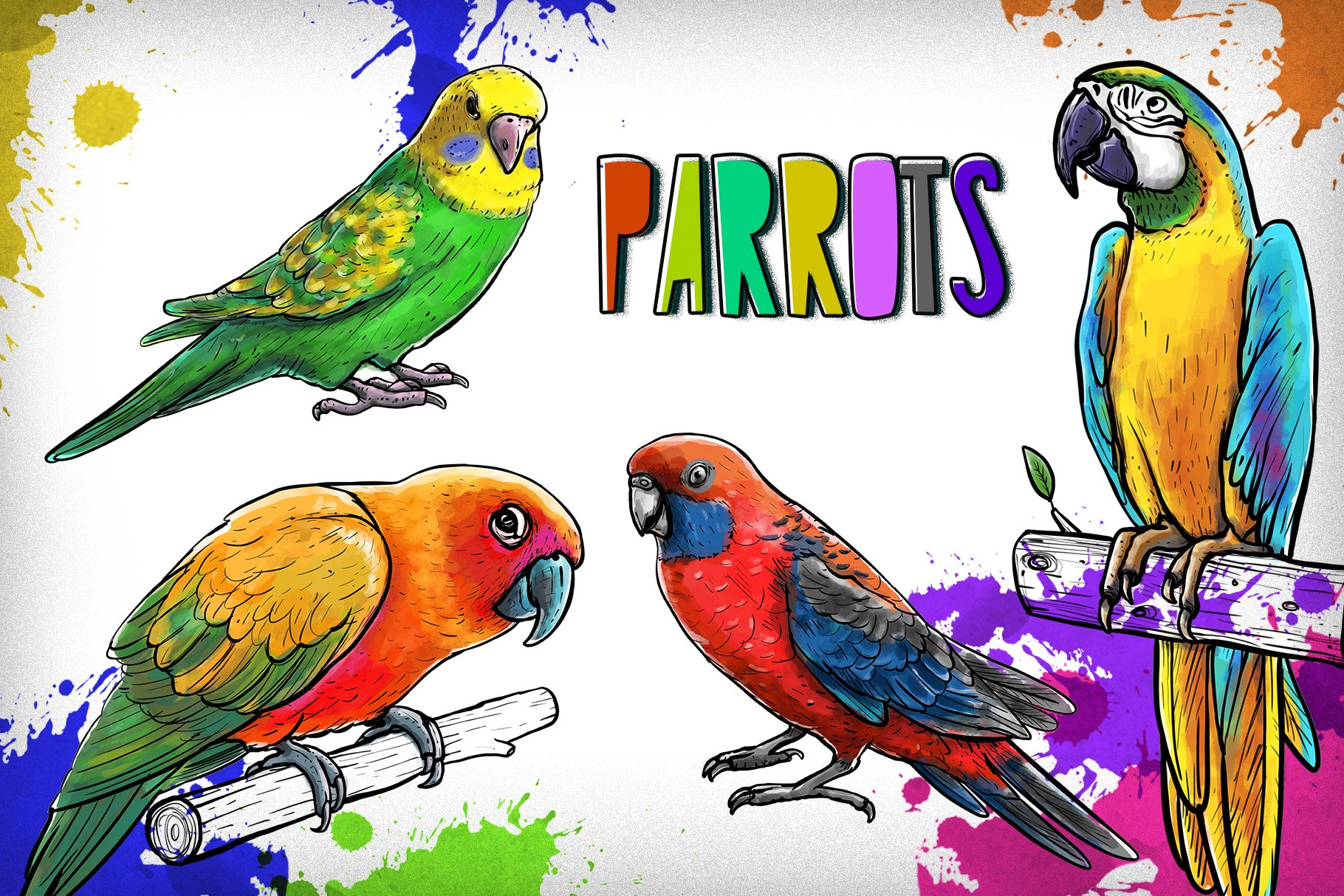 Drawn parrots example image 1