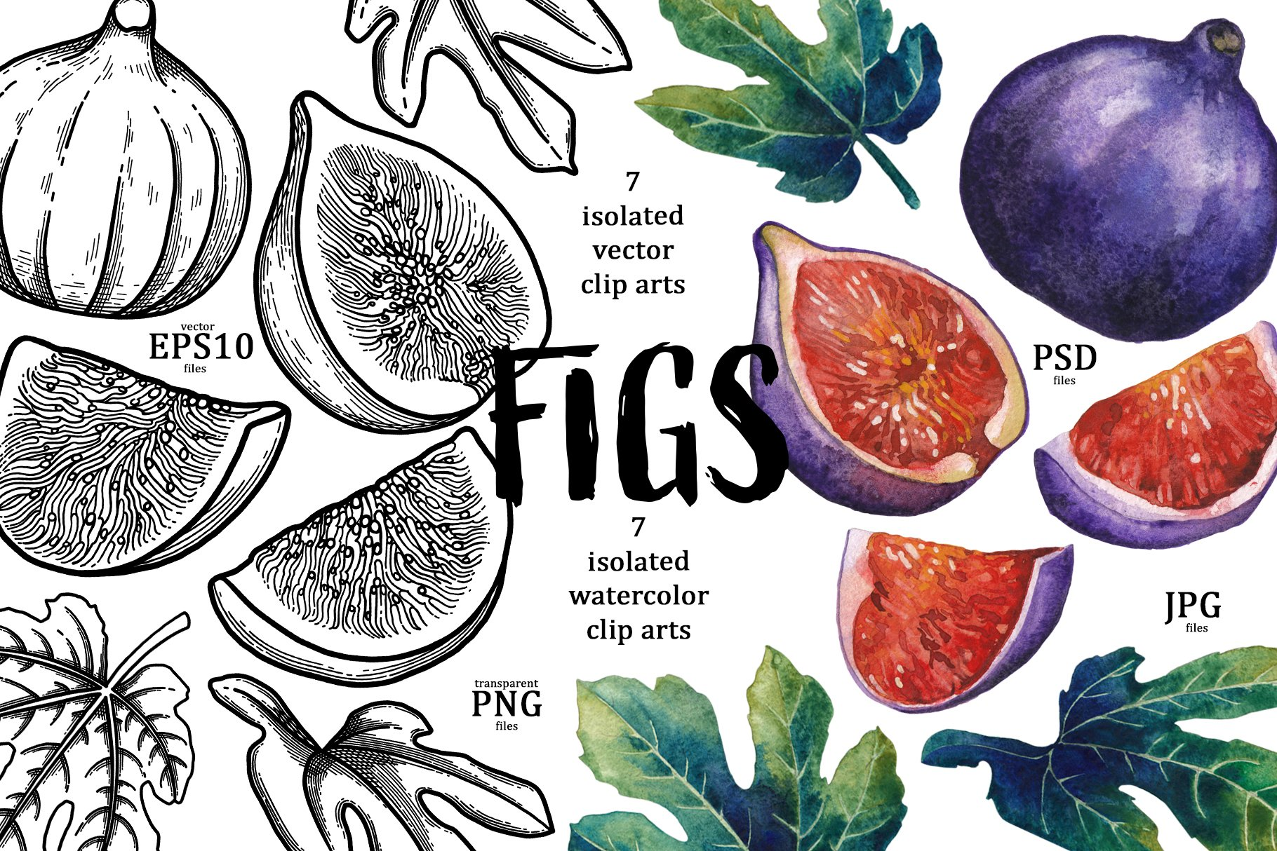Figs example image 2