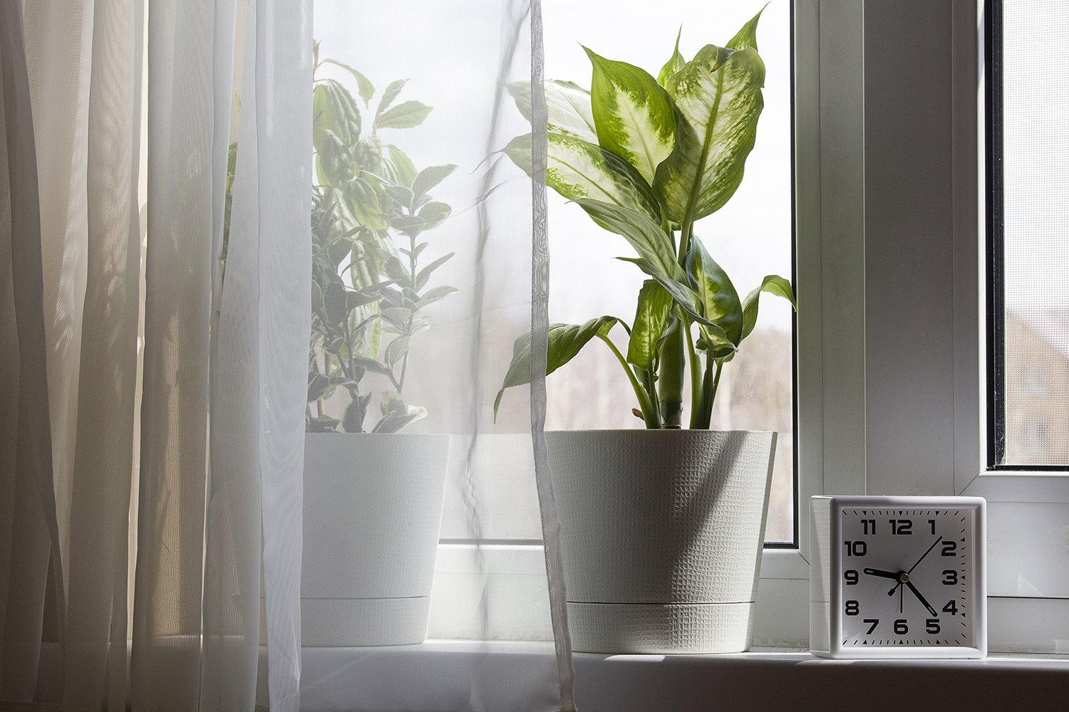 houseplants in white flower pot and clock near the window example image 1