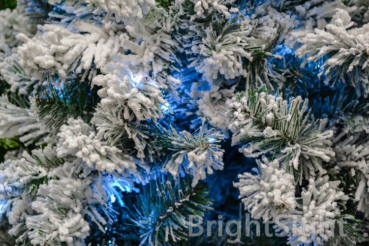 Christmas tree with snow frost and blue light example image 1