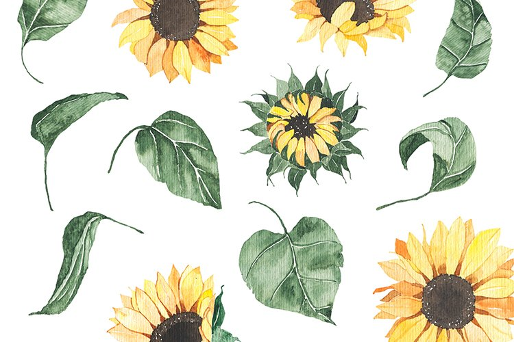Watercolor Sunflowers collection example image 14