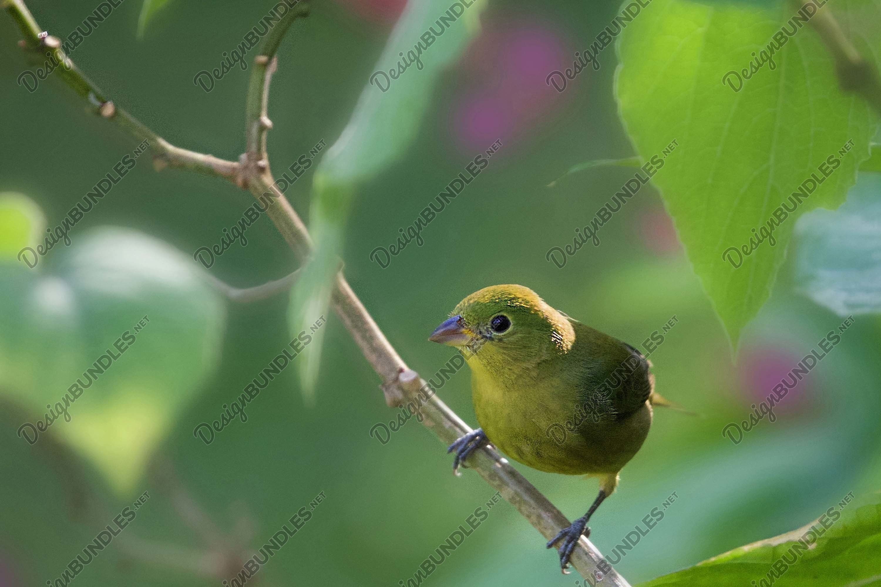 Stock Photo - Close-Up Of Bird Perching Outdoors example image 1
