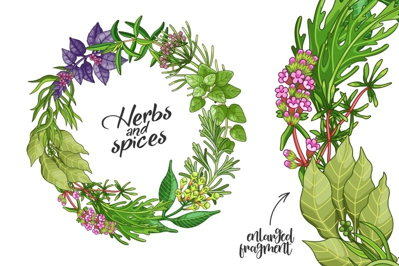 Green spices and herbs templates example image 4