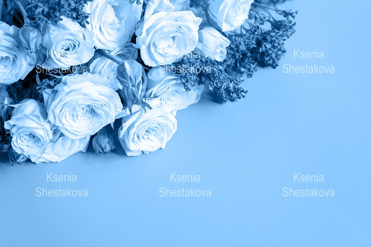 toned blue color flowers roses in full bloom example image 1