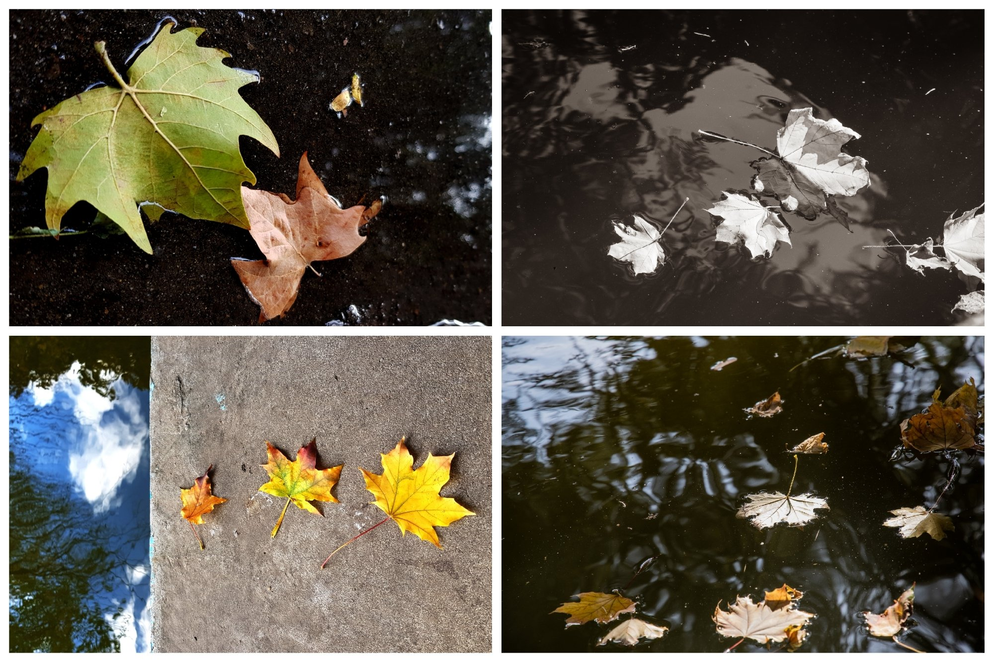 Set of 20 Autumn Photo Backgrounds with Maple Leaf example image 2