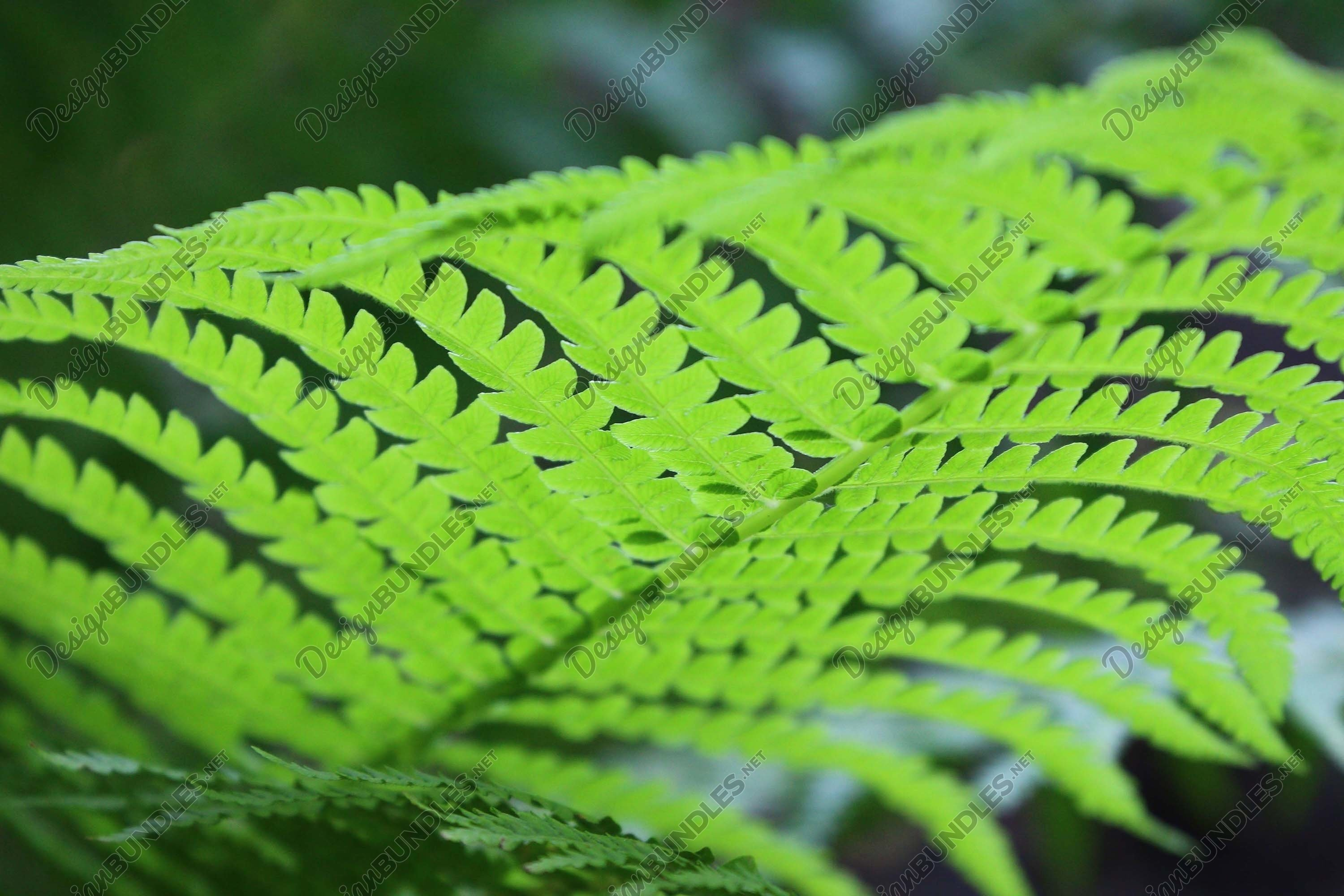 Stock Photo - Close-Up Of Fern Leaves example image 1